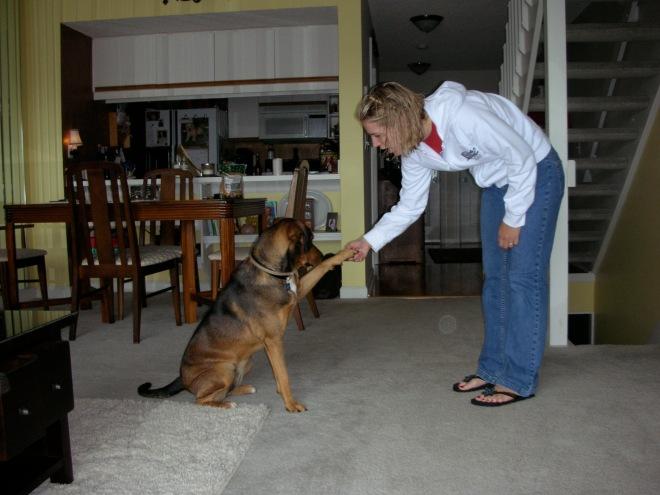 Maggie - trick - shake
